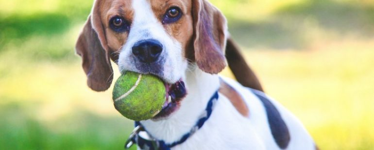 Pest Prevention and Treatment for Your Pets